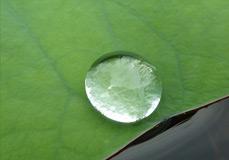 dew_drop